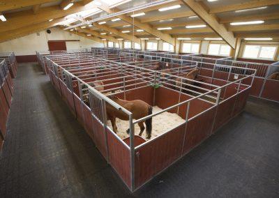 Inside Sindrastadir stable